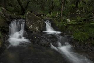 Rincones del bosque (Explore)
