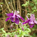 Flowers - (PL) Orlik