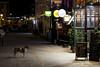 LJR_0628 (lin_juju17156) Tags: dog street อาหาร ตามสั่ง 50mm nikon