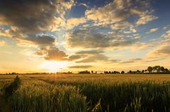 sunset in Erding (drummerwinger) Tags: rot sonnenuntergang erding wolken himmel korn getreide feld sonne sun canon700d tokina stimmung clouds sunset