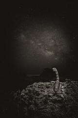 NIGHT SCORPION (Fran Ramos.) Tags: naturaleza nocturnas noche via lactea cartagena calblanque franramos frascoramos animal veneno aguijon