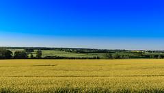 Under en djupblå himmel (MagnusBengtsson) Tags: fs170528 djup fotosondag raps rapeseed fält fields blue blå himmel sky sommar summer