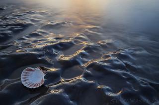 Seashell by the Seashore at Sunshet (EXPLORE)