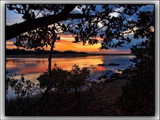 mangroves sunrise