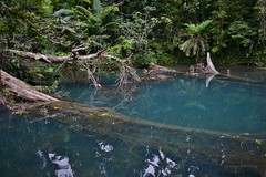 The Blue Hole (shaneblackfnq) Tags: blue hole daintree national park swimming pool water creek cooper shaneblack fnq far north queensland australia tropics tropical kaba gada