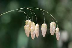 DSC_0395.jpg (ldjaffe) Tags: bigquakinggrass ucsantacruz greatmeadow