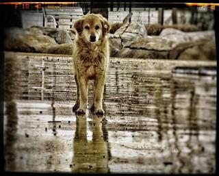 Wet dog.