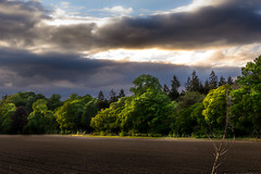 Forest Plains (NathanJNixon) Tags: tree trees forest line field farm farming green orange black yellow blue white cloud clouds cloudy sunset sunny bright highlight lighting dark shadow countryside country side britain europe scotland perth european life calm majestic pretty beauty beautiful happy calming peaceful dusk evening late afternoon godray bursting purple photography canon landscape eos 60d path walk travel scene sky plough shire perthshire huntingtower hour golden