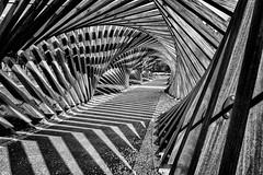 Katalêpsis (CrËOS Photographie) Tags: carré square courbe curve perspective graphisme graphism graphique graphic minimalisme minimalism architecture wood bois spirale spiral