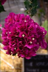 DSC_8866 (facebook.com/DorotaOstrowskaFoto) Tags: ogródbotaniczny kwiaty powsin warszawa
