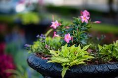 Garden (dav8) Tags: 105e nikon