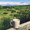Peppermint & Assam in the Irish west.. {{click ℹ️ below for more after-the-storm magic} 🍵🐎⛰💚 (sacredhearthassembly) Tags: wandering adventure landscape irish movement meditation practice hsp highlysensitiveperson soul sensitivesoul sensitive chronicillness dysautonomia prayer spiritanimal animalspirit teacup spiritual spirit turf bog grasses grass vscocam vsco happiness life alive walk countrygirl farmlife farm rollinghills mamanature mothernature natural nature outside countryliving countrylife inthecountry countryside clouds sky mountains magick magical magic horsetherapy equine horse assam teatime afternoontea tea wideopenspace wideopen open freedom green fields westofireland ireland connemara sacredhearthassembly sacred