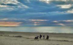 A ride on the beach (Adri Padmos) Tags: sunset horses ride beautifulphoto horseride zandstrandbeachsandwater beach northseabeach northsea netherlands zeeland schouwen renesse