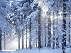 '...and then finally.....place in the chiller..'               (see description) (Milesofgadgets ) Tags: petermiles petermiles orličkycz orličky winter winterscene eaglemountainscz