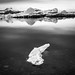 Jokulsarlon glacier lagoon - Iceland - Black and white photography