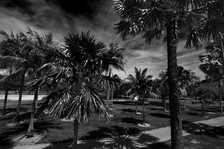 Mindil Beach Reserve