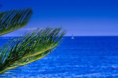154 ~ 365 (BGDL) Tags: lightroomcc nikond7000 bgdl high5~365 niftyfifty afsnikkor50mm118g ocean palmtree leaves adeje tenerife canaryislands calm
