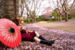 The end of cherry blossom (Mei-) Tags: volks dollfiedream dollfie dd beatrice kagura