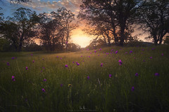 View from the side of my house. (wesome) Tags: adamattoun sunset redding spring flowers