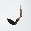 _6060390 (Brian Wadie Photographer) Tags: gusty 40mph winds inverting black kite baldeagle blackkites hooded kestrel milkyowl sacredibisyellowbilledkite secretarybird vultures vutlures