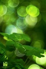 ESTATE (Lace1952) Tags: estate verde bolle sfocato bokeh panasonic lumix pancolar50mm