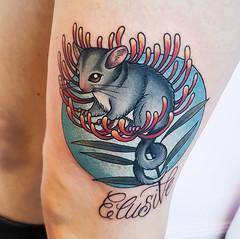 #tattoos  Leadbeater's Possum Joey sittting in a tree Waratah flower.  #leadbeaterspossum #possum #babypossum #treewaratah #waratah #elusive  #brisbane #tattoo #dreadarling #withlovetattoo (DreaDarling) Tags: brisbane tattoos withlovetattoo elusive tattoo waratah treewaratah babypossum dreadarling possum leadbeaterspossum