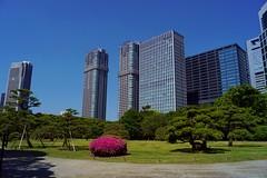 Tokyo (Tsukiji) - jardin Rama Rikyu 1 (luco*) Tags: tokyo parc park garden jardin hama rikyu tsukiji édifices buildings shiodome