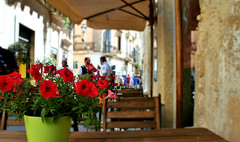 Centro storico Lecce (Mediterranea.....scatto e basta!) Tags: fiori vaso locali borgoantico