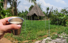 IMG_45504 (Manveer Jarosz) Tags: auroville bharat hindustan india solitudefarm southindia tamilnadu wwoof worldwideopportunitiesonorganicfarms break chah chai cup farm field home house hut metal rural solitude tea view village