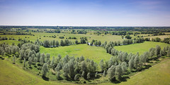 Dedham Vale (MHDigital - Mark Harrop) Tags: markharropphotography dedham drone dronephotography markharrop mhdigital noperson landscape countryside nature rural agriculture field grass summer outdoors farm hayfield country sky hill tree pasture travel scenic johnconstable