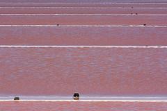 Pink salt pans (Jan van der Wolf) Tags: map158364vv pink salt zoutpannen water saltpans rose lines lijnen saltmarshes saltflats salins salinsdegruissan gruissan