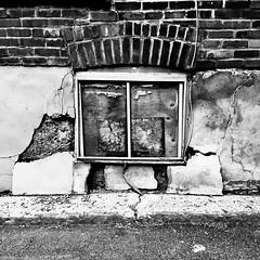 Radiographie d'une espèce urbaine non-identifiée... (woltarise) Tags: cochon urbain ressemblance mur trous dessin textures ruelle plateau montréal imagination rêve