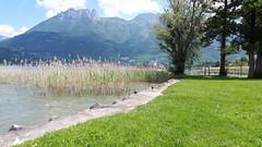 Lac + château de Duingt (Baptiste Brossette) Tags: lacdannecy annecy roseaux paysage montagnes alpes hautesavoie lac duingt châteaudeduingt