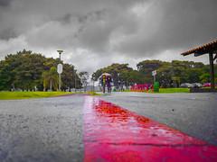 Ciclovia do Parque Barigui (Eduardo PA) Tags: curitiba paraná nokia pureview microsoft windows phone 950xl lumia wp ciclovia do parque barigui