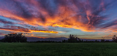 sky dragon (andy_8357) Tags: sky sunset field orange blue trees magnificent colorful sony a6000 selp1650 sel1650 e pz 16mm50mm ilce6000 ilcenex alpha mirrorless silhouette boulder colorado valley plains mountains foothills dramatic fire fiery dragon wild spectacular front range breathtaking