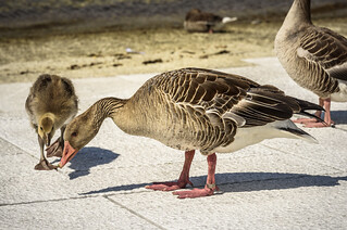 Oslo - Grey Goose