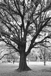 My favourite tree!