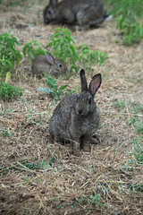 Family (That_Smiling_Face) Tags: coniglio animals rabbit caffarella rome latium italy