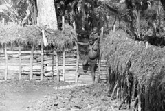 IrianJaya-5-405-001 (Melanesian cultures) Tags: mamberamo ubrub ilaga amgotro hollandia papua irianjaya nieuwguinea meervlakte baliem francisanen franciscaan wisselmeren jaren50 vijftigerjaren nederlandsnieuwguinea papoea zusters broeders