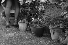La jardinière jardine (Pi-F) Tags: fleuriste jardin femme jambe nb nbbwsw pot fleur indiscret message dessous noiretblanc