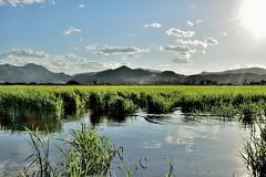 Feliz martes de nubes! (ZAP.M) Tags: arroz campos nubes cielos nwn paisaje naturaleza nature montañas lamarjal pego valencia españa flickr mpazdelcerro zapm