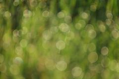 Light reflected from dew (dylan583) Tags: outoffocusonpurpose impressionist bokeh tamron sonya700 tamronspf45670300usd dew backlit grass saskatchewan
