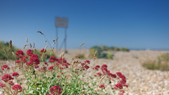 Eastney morning (Andrew Malbon) Tags: leica leicam9 m9 summilux 35mmf14 35mm wideangle wideopen blue bluesky redblue flowers summer hampshire wild shore shoreline solent signage sign portsmouth southseacommon southcoast morninglight morning panoramic