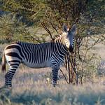 DSC07037 - NAMIBIA 2017  HR112 f (Gosling) thumbnail