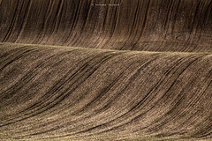 Spring field texture (Tatsiana Volskaya) Tags: spring czech field cultivated agriculture sowing nature panorama landscape brown wave corn 2017 moravia south d3100 nikon summer