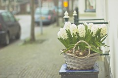 Streets with details (sonia.sanre) Tags: holanda holand netherlands beautiful white detalles details flores flowers calle street