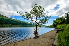 Interesting tree Loch Lomond Scotland (Trip 49) Tags: loch lomond scotland tree fuji xt2