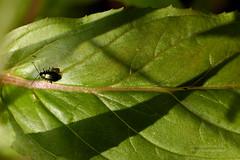 D3X_0686_fl (dmitrytsaritsyn) Tags: bug nikon d3x 105mm r1c1