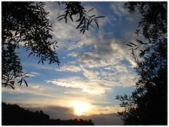 Al anochecer (3) .. (margabel2010) Tags: cieloytierra nubes ramas blanco blancoyazul blancoynegro negro puestasdesol árbol olivos hojas airelibre sol solysombra