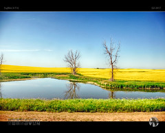 Great Plains Drifting (tomraven) Tags: wter pond lake trees plains rapeseed tree train reflections horizon distance tomraven aravenimage q32017 fujifilm xt10 tomraveninamerica